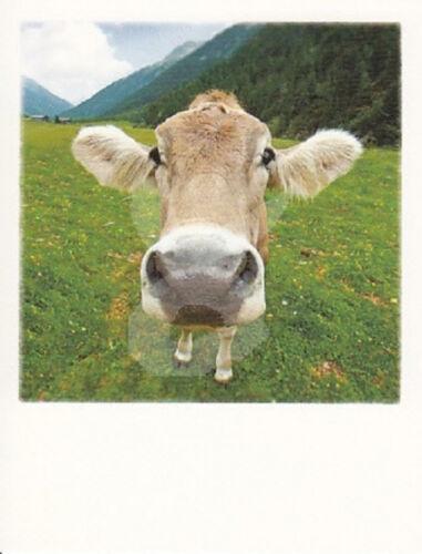 """JAG CZ polacard /""""vache/"""" carte postale Carte de voeux Postcrossing Prairie montagne forêt Carte"""