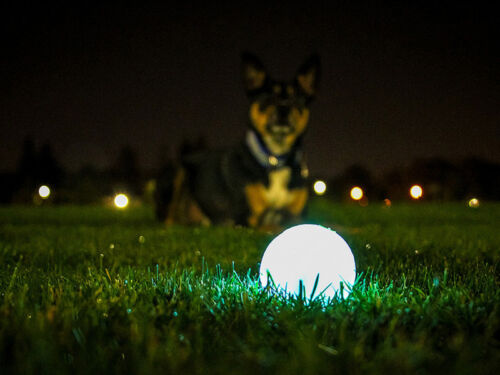 Glow In The Dark Toys. Backyard ...