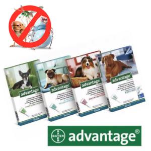 ADVANTAGE-40-100-250-400-Chiens-4-Pipettes-Anti-Puces-Fleas-treatment