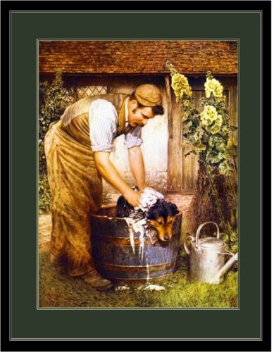 Vintage English Poster Print Collie Dog Gets a Bath Art Picture