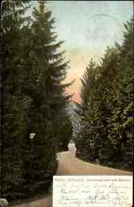 Holsteinische-Schweiz-Color-Postkarte-1911-gelaufen-Tannenweg-nach-dem-Bahnhof