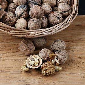 Wild Walnuts Vegan Bulk Diet Healthy Nutrisystem Snacks Wholesale