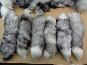 #1 Quality XL Tanned White Ranch Blue Fox Tails//Crafts//Real USA Tail//Harley part