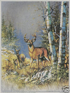 White Tail Fawns by Kevin Daniel Deer Doe Poster 11x14 WILDLIFE ART PRINT