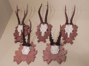 Other Antique Decorative Arts Loyal Rehgweihe Deer Antlers Hunting Trophies Gift Decoration Idea #22.476