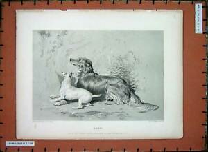 Original-Old-Antique-Print-Sir-Landseer-Puppy-Dogs-Lewis-Fowler