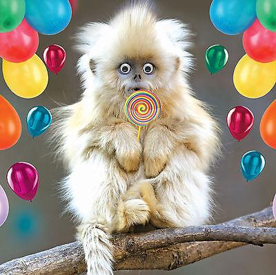Mignon blanc singe blanc carte de vœux fun tracks toute occasion greetings cards