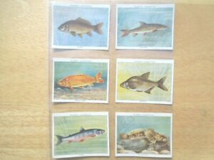 1935-Player-FRESH-WATER-FISHES-coarse-fishing-set-25-cards-Tobacco-Cigarette