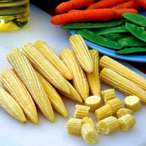 Vegetables Sweetcorn F1 Minipop Min Baby Sweetcorn 90 seeds