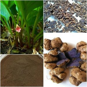 Men-Health-Sexual-Enhancement-Pure-Kaempferia-Parviflora-Powder-Black-Galingale