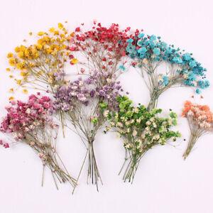 PM-12Pcs-Dried-Flower-Branch-Specimen-Epoxy-Card-Bookmark-DIY-Accessories-Dec