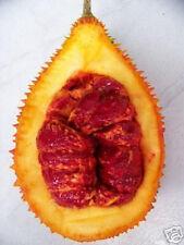 GAC Momordica cochinchinensis gak fruit rare exotic vine plant aloe seed 2 SEEDS