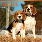 Beagles 2017 Square by Inc BrownTrout Publishers 9781465055484 Calendar 2016