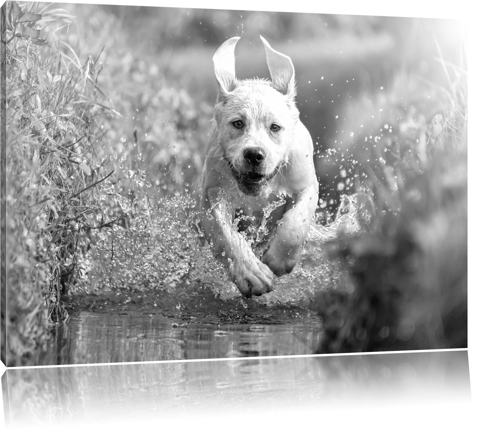 Labrador-Welpe rennt durch das Wasser eines Flusses Kunst B&W Leinwandbild Wandd