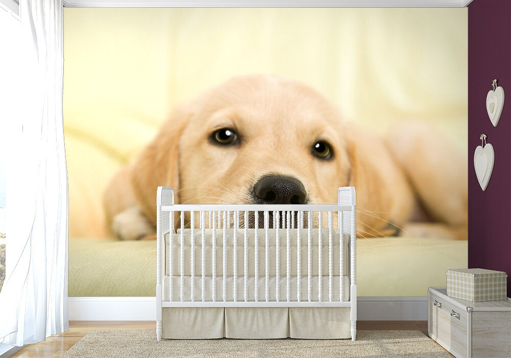 Large bedroom paper wallpaper 254x183cm wall mural Golden retriever puppy dog
