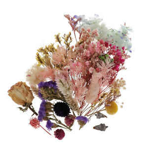 Lots Real Dried Flowers Pressed Leaves Diy Resin Casting Mould Art Crafts Ebay