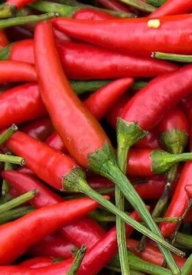 Next Day Free Shipping Chile De Arbol Hot Pepper Seeds 25