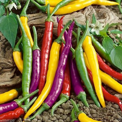 Cayenne Pepper Hot Mix - A fiery mix of red, yellow, purple, green and orange !