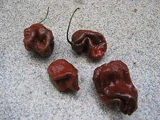 Trinidad SCORPION MORUGA Marrone/Brown 5 semi record mondiale peperoncino chili semi