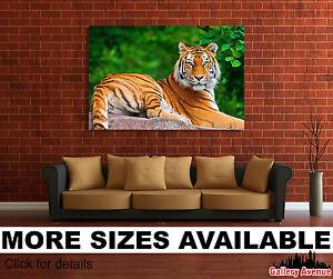 Wall Art Canvas Picture Print - Tiger Big Wild Cat 3.2