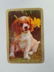 VINTAGE-SWAP-CARDS-COLES-034-PUPPY-DOG-A-034-BLANK-BACK