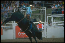 331082 Bull Riding A4 Photo Print