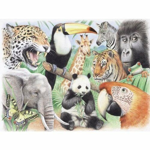 REEVES JUNGLE ANIMALS LARGE WATERCOLOUR PENCIL BY NUMBERS COLOUR & PAINT PPWP4