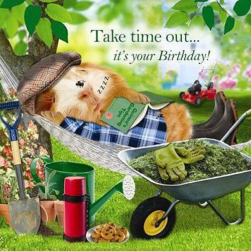 Garden Hammock Funny Birthday Card Afternoon Snooze Guinea Pig Gardening Mower For Sale Online