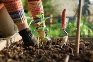 Kit-jardin-potager-lot-de-de-2300-Graines-legumes-Methode-BIO-semis-plantes