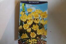 20 Blumenzwiebeln,Crocus Romance#BZ45
