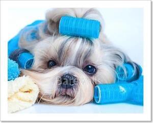 Details about Shih Tzu Dog Hair Style Art Print Home Decor Wall Art Poster  - J