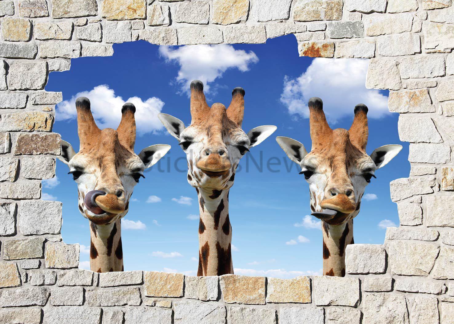 Aufkleber Wand Schein Auge Giraffen Ref 8512