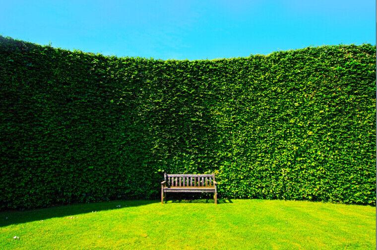 3D Pflanzen Hintergrund 87 Tapete Wandgemälde Wandgemälde Wandgemälde Tapete Tapeten Bild Familie DE | Qualitativ Hochwertiges Produkt  | Großartig  |  3ab0bf