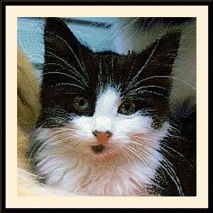 Black-amp-White-Kitten-Exclusive-Cross-Stitch-Kit