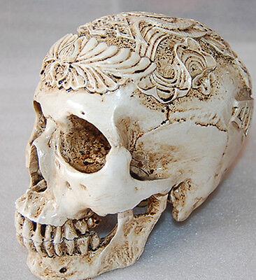 Egypt Human Skull Replica Resin Model Medical Realistic lifesize 1:1 Halloween