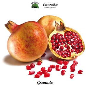 Punica granatum seeds 50 semillas Granado