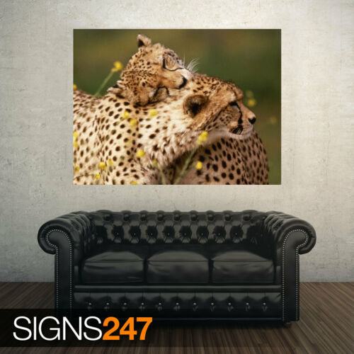 3767 AFFECTIONATE CHEETAHS Animal Poster Photo Poster Print Art * All Sizes