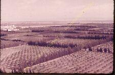 Original Ekta Diapositive transparancy Algérie Plantation agrumes à Relizane