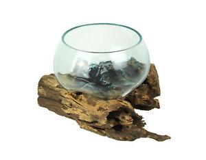 Blown Melted Glass Decorative Bowl / Mini Terrarium On Teak Driftwood Base