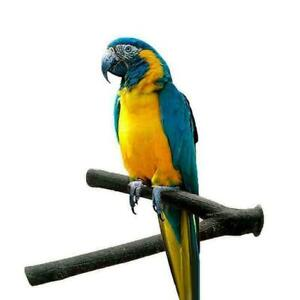 Pet-Parrot-Wood-Fork-Stand-Rack-Toy-Branch-Perches-Super-SELL-For-Bird-Cage-Y2I1