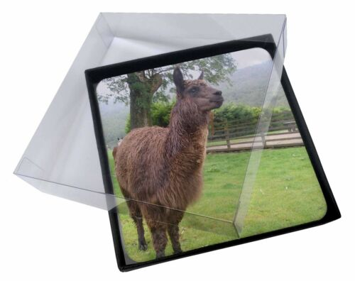 4x Llama Picture Table Coasters Set in Gift Box, AL5C