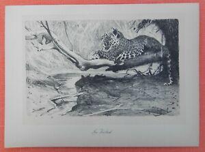 Le Meilleur En Cachette Leopard Wilhelm Kuhnert Afrique Lithographie 1920-afficher Le Titre D'origine