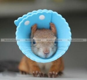 Sugar Glider Rat Squirrel Hamsters Elizabeth Collar Stop Biting Scratching