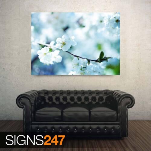 Flores Blancas Ciruela chabacana AD825 cartel de la naturaleza-arte cartel impresión A0 A1 A2 A3