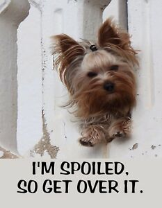 Metal Refrigerator Magnet Dog I M Spoiled So Get Over It Yorkie Dogs Humor Ebay