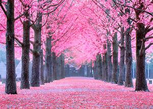 Autumn Trees Pink Leaves Scene 10x8ft Vinyl Studio Backdrop Photo