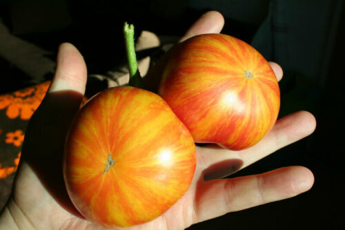 BIO 10 semillas Graines Semi Tomate de Beauty Queen Saatgut seeds
