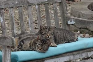 SPONSOR-EVICTED-RELOCATED-BROTHERS-FRIENDLY-FERAL-CAT-FOOD-VET-Rec-COLOR-PHOTO