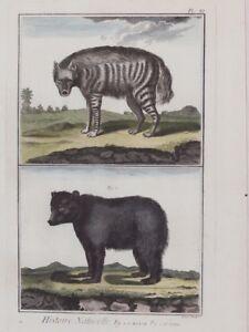 IENA-ORSO-DIDEROT-D-ALEMBERT-ANTONIO-BARATTI-HYENA-BEAR-1770-CIRCA-GRANDE-COLORI