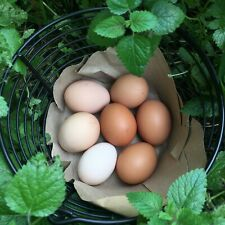 New Listing3 Fertile Chicken Eggs For Hatching